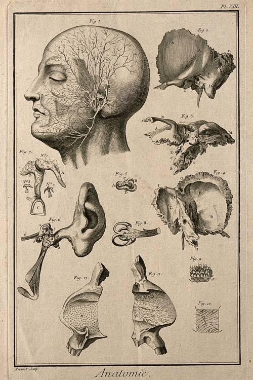 Tekening uit 1762 van het oor en de slaap